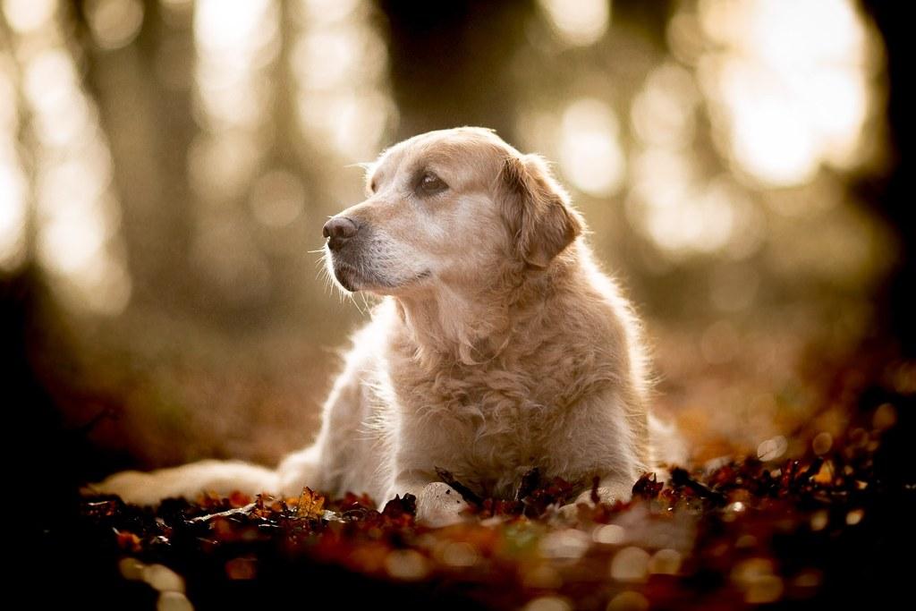 Educateur canin comportementaliste Poitiers-Vienne-86
